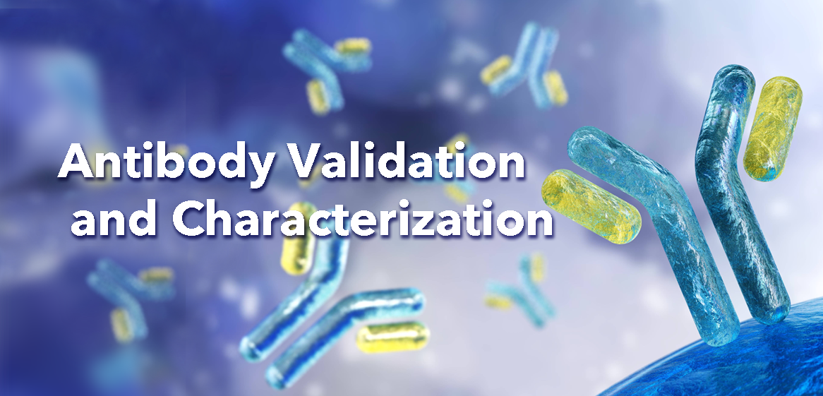 Antibody Validation and Characterization - Bio-Trac Biotechnology Training