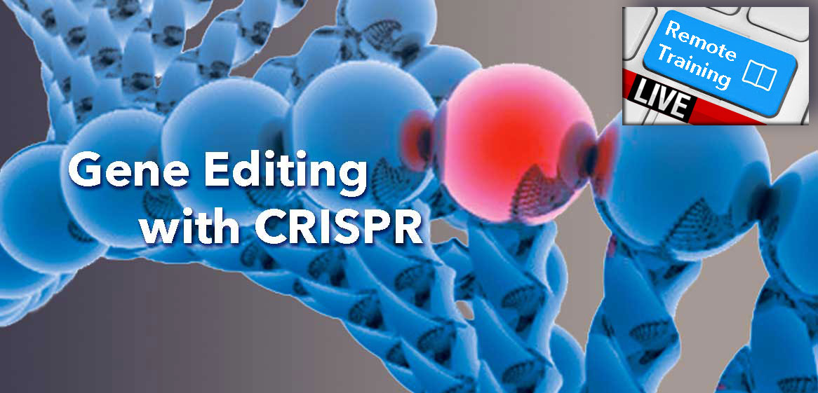 RT CRISPR